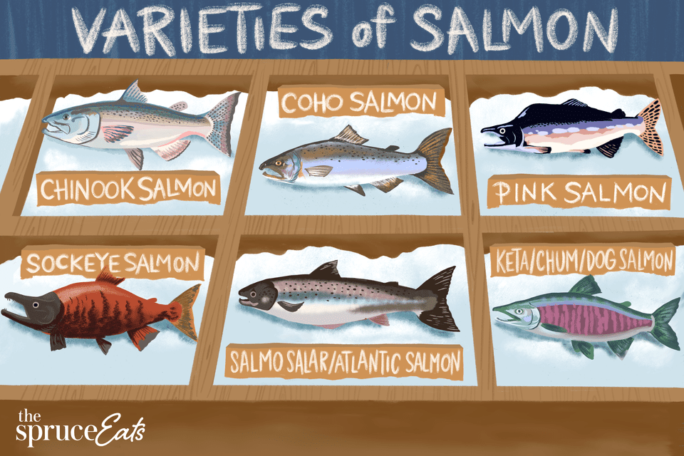illustration showing varieties of salmon