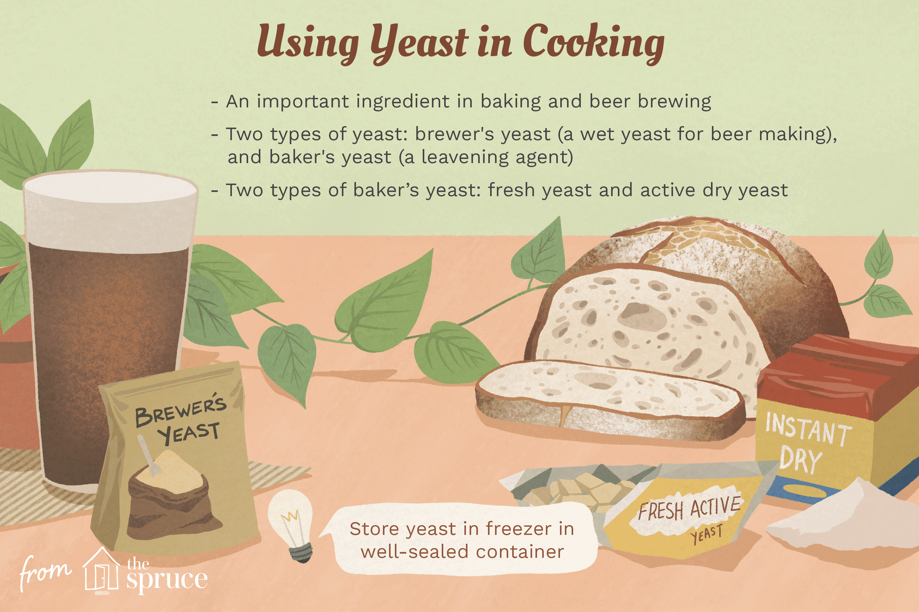 Illustration With Facts About Yeast