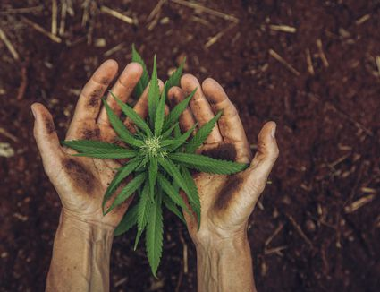 Combining wine and weed takes both science and skill