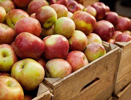 Crates full of apples