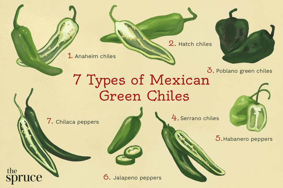 illustration depicting types of mexican green chiles