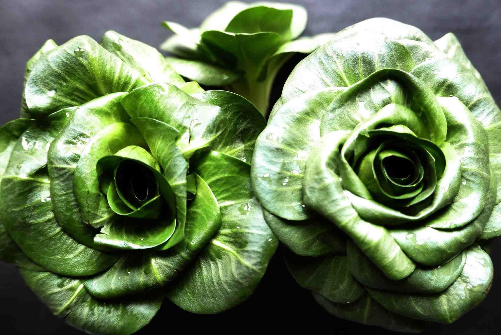 Green Escarole (Endive)