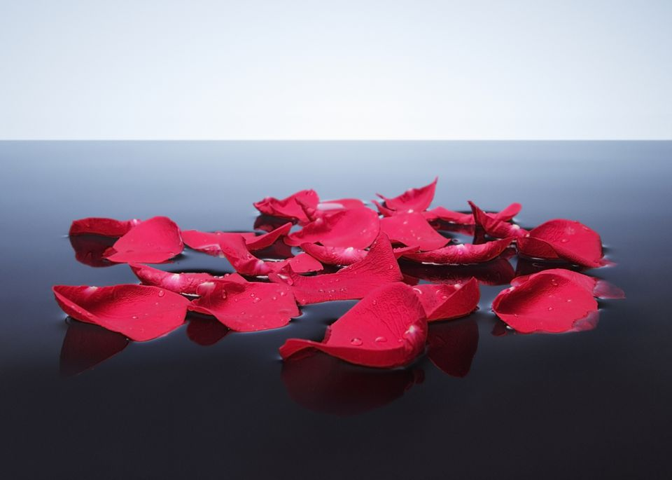 Rose petals floating on water