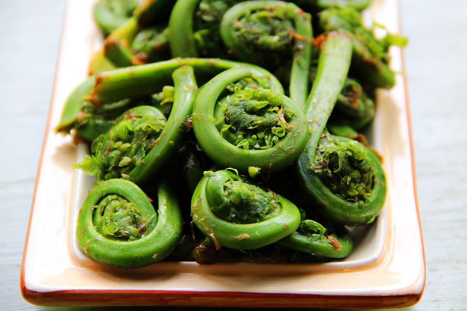 Fiddleheads harvested in New England