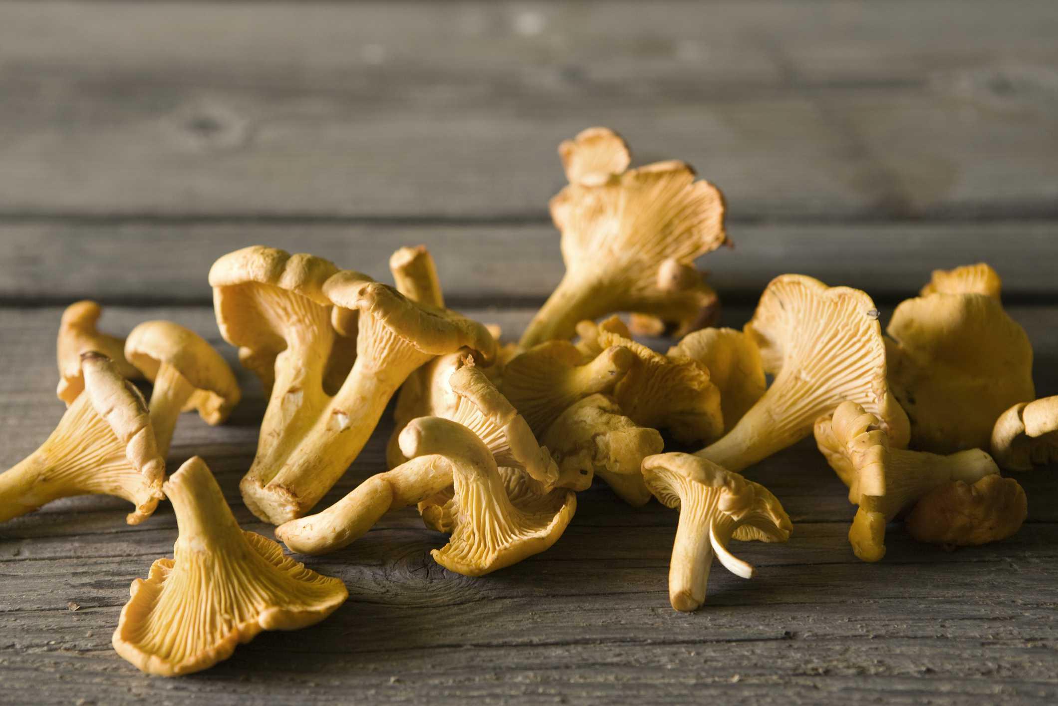 Chanterelle wild mushrooms