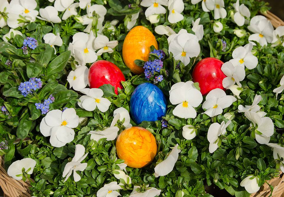 High Angle View of Easter Eggs and Flowers in Basket