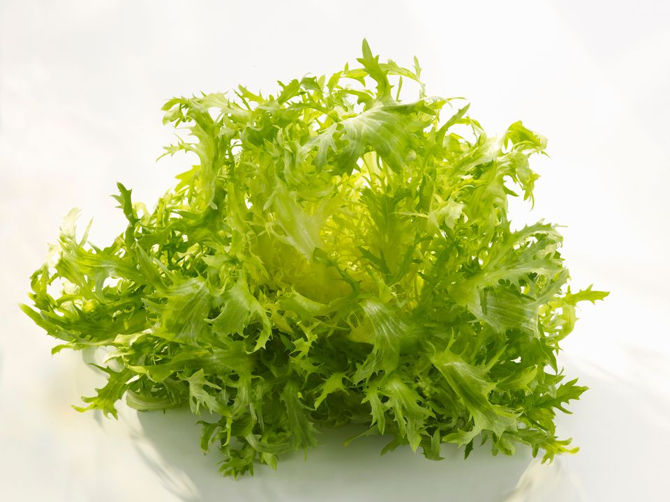 A close-up of fresh frisée