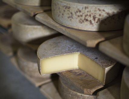 Wheels of Swiss mountain cheese