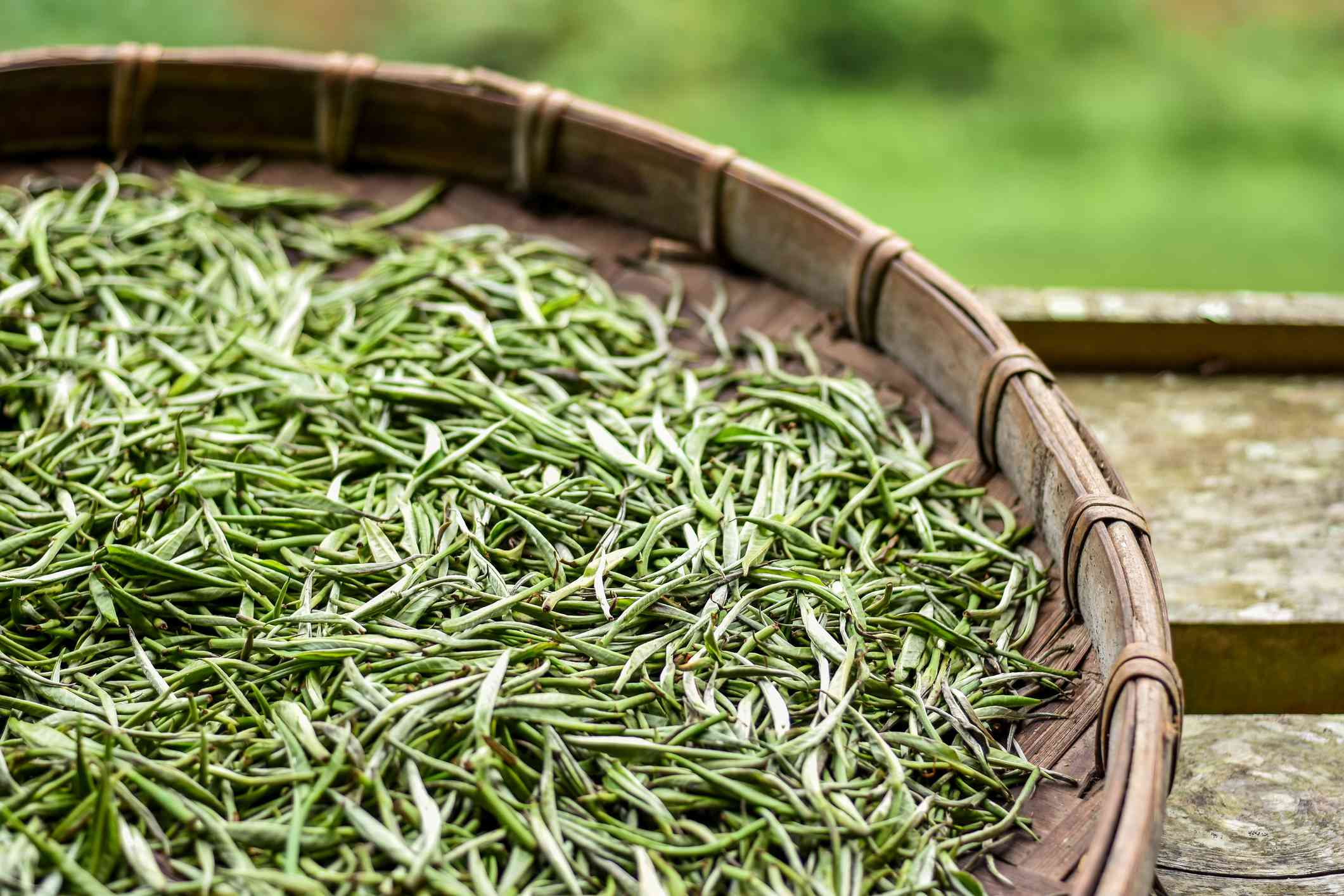 Harvested white tea leaves