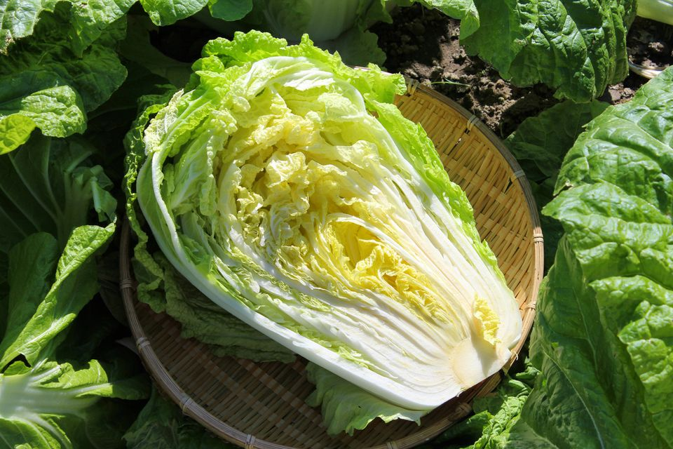 Close up of Chinese cabbage in basket
