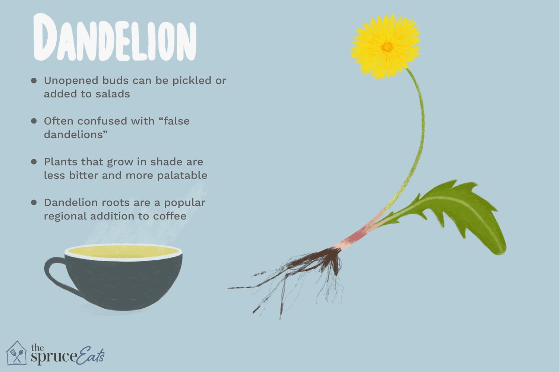 eat dandelions