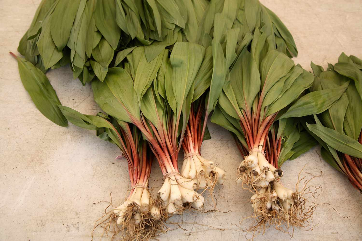 Wild ramps in NYC.