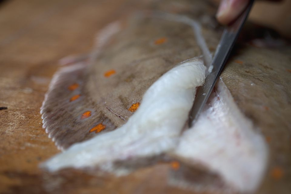 Filleting flounder