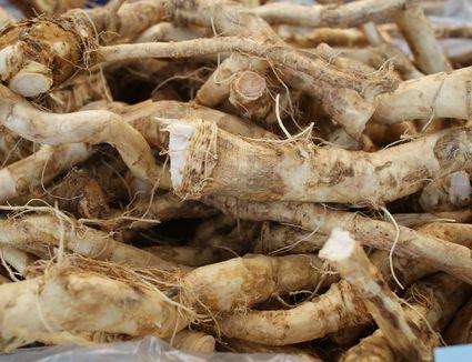 Fresh Horseradish Root