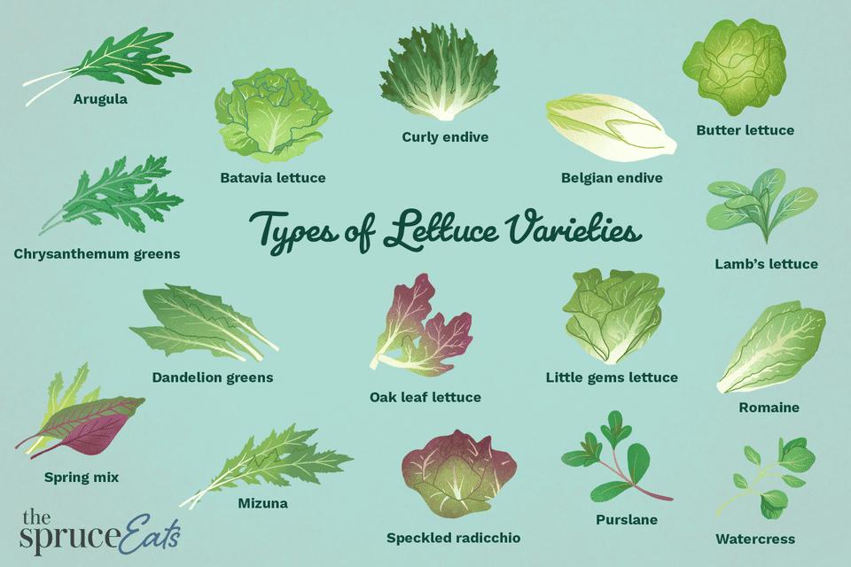 types of lettuce varieties