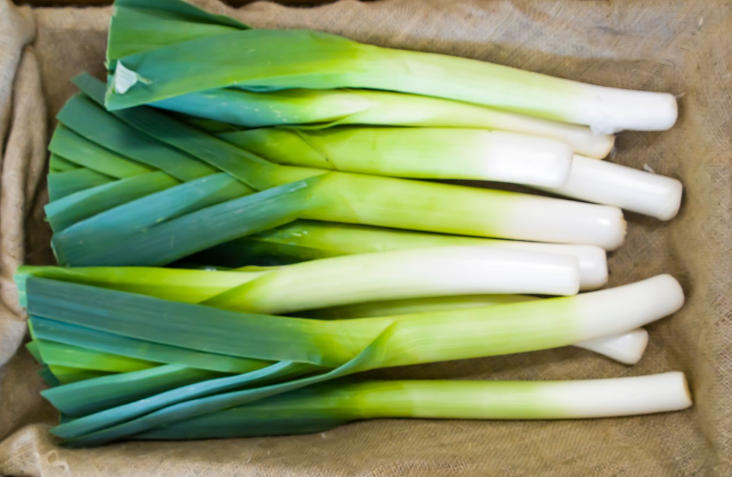 What Are Leeks and How Are They Used?
