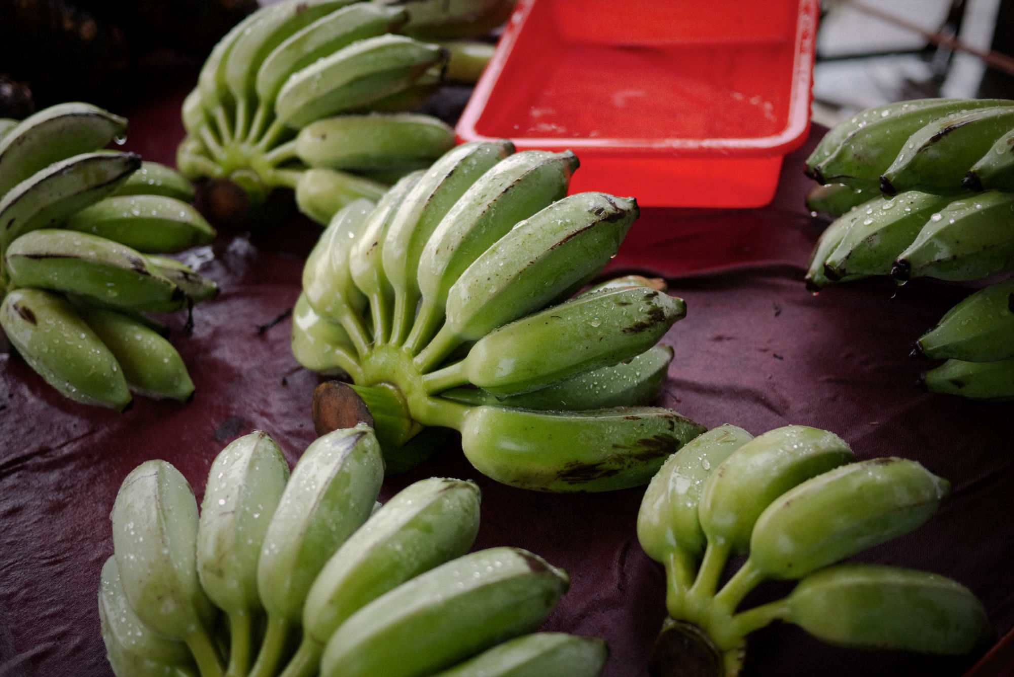 Bunches of plantains being washed