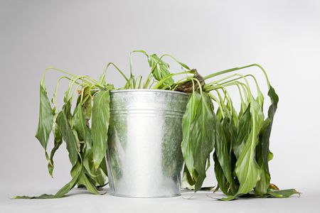 How to Save Dying Herb Plants