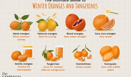 illustration showing variety of winter oranges