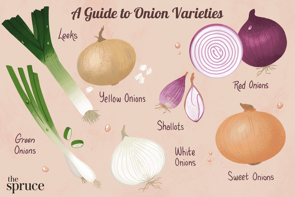 illustration showing different types of onions