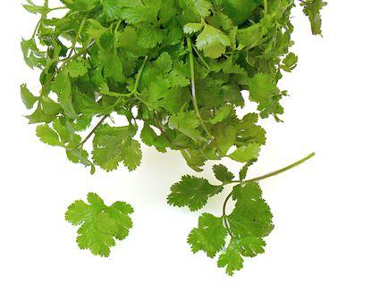 Cilantro, coriander, measures, herb, recipes, receipts