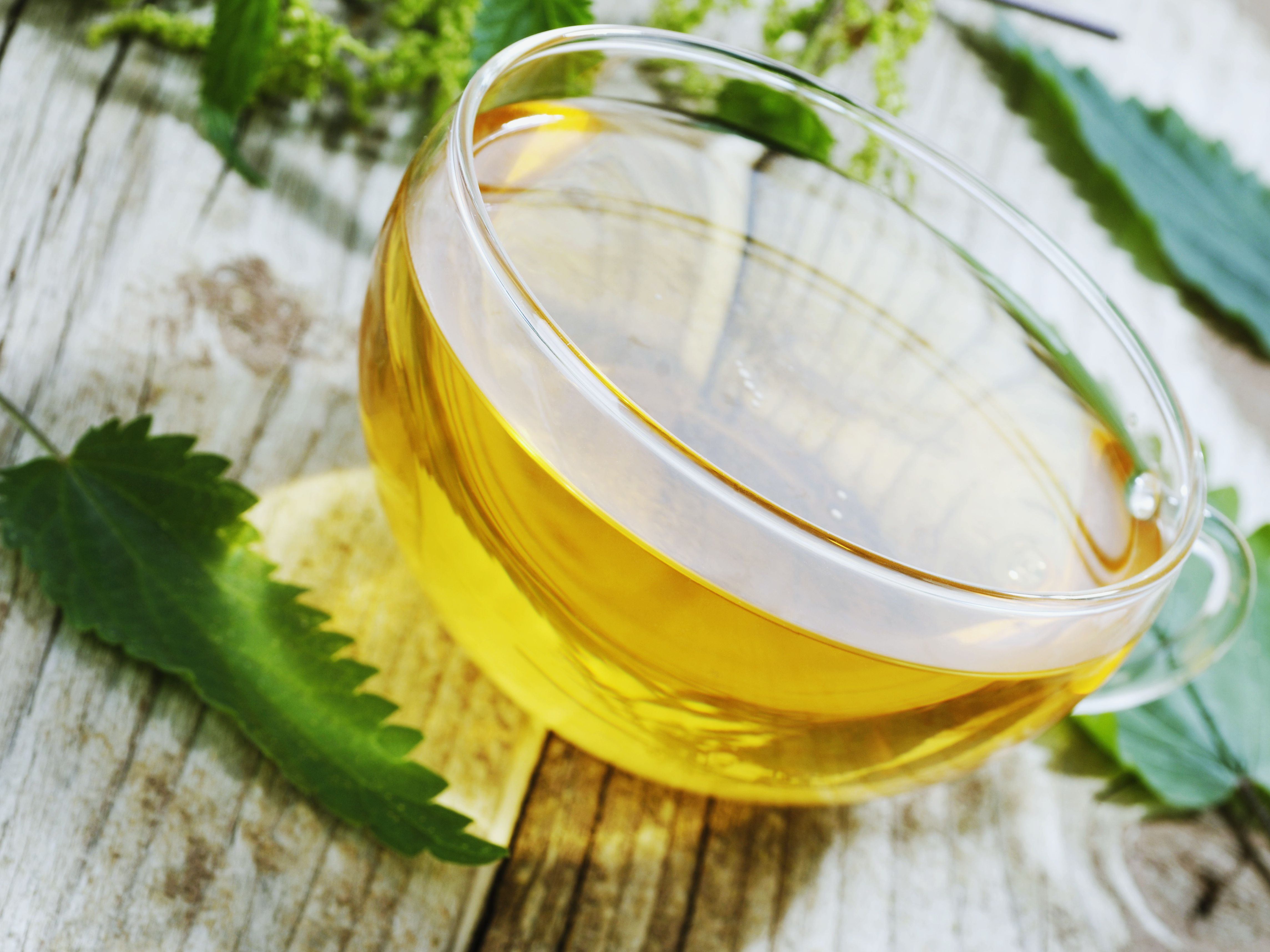 Brewing Nettle Tea and Its Health Benefits