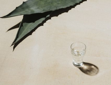 mezcal and agave leaves