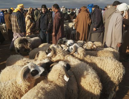 A sheep market in Morocco