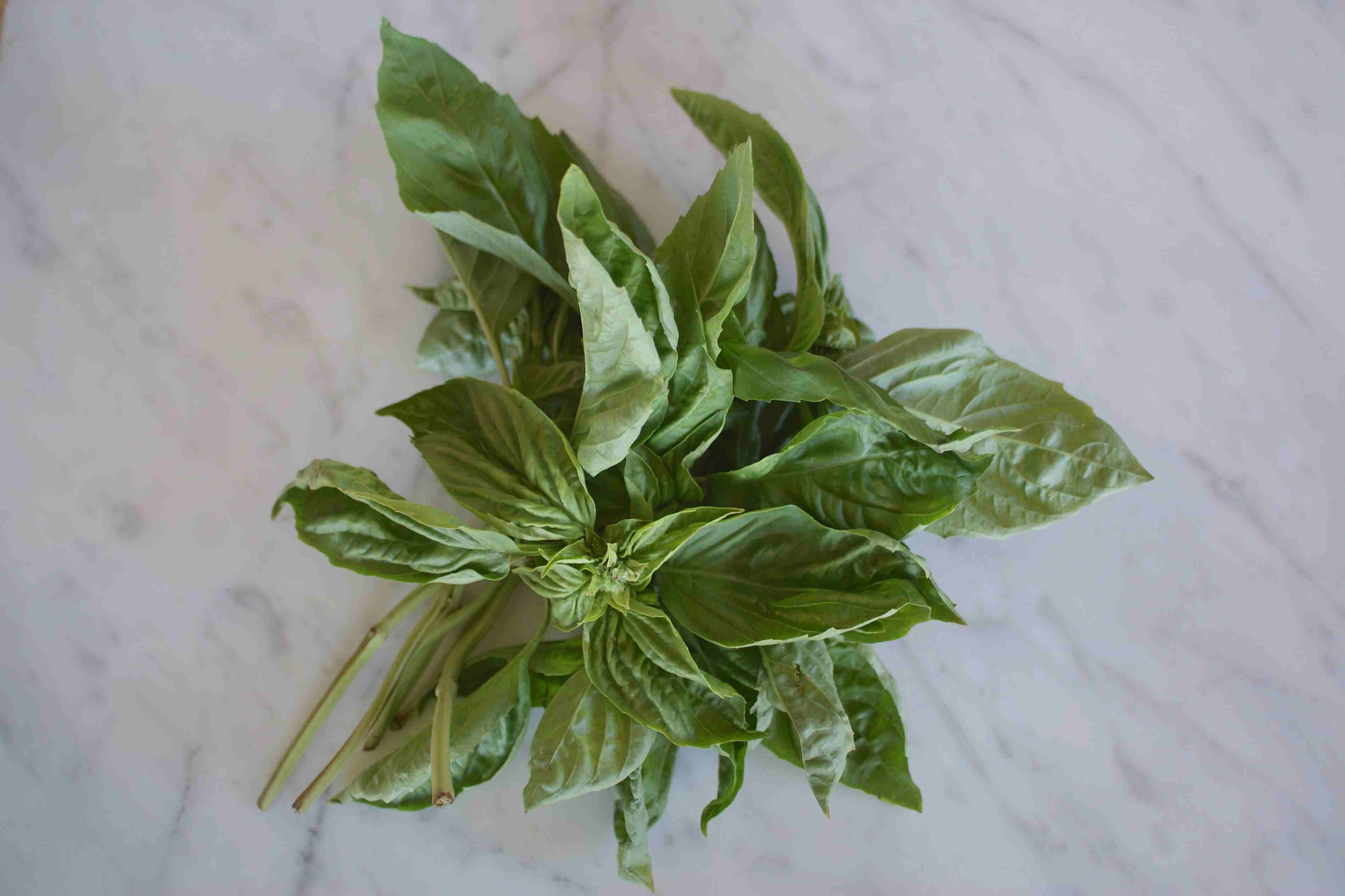 Bunch of Basil Stems
