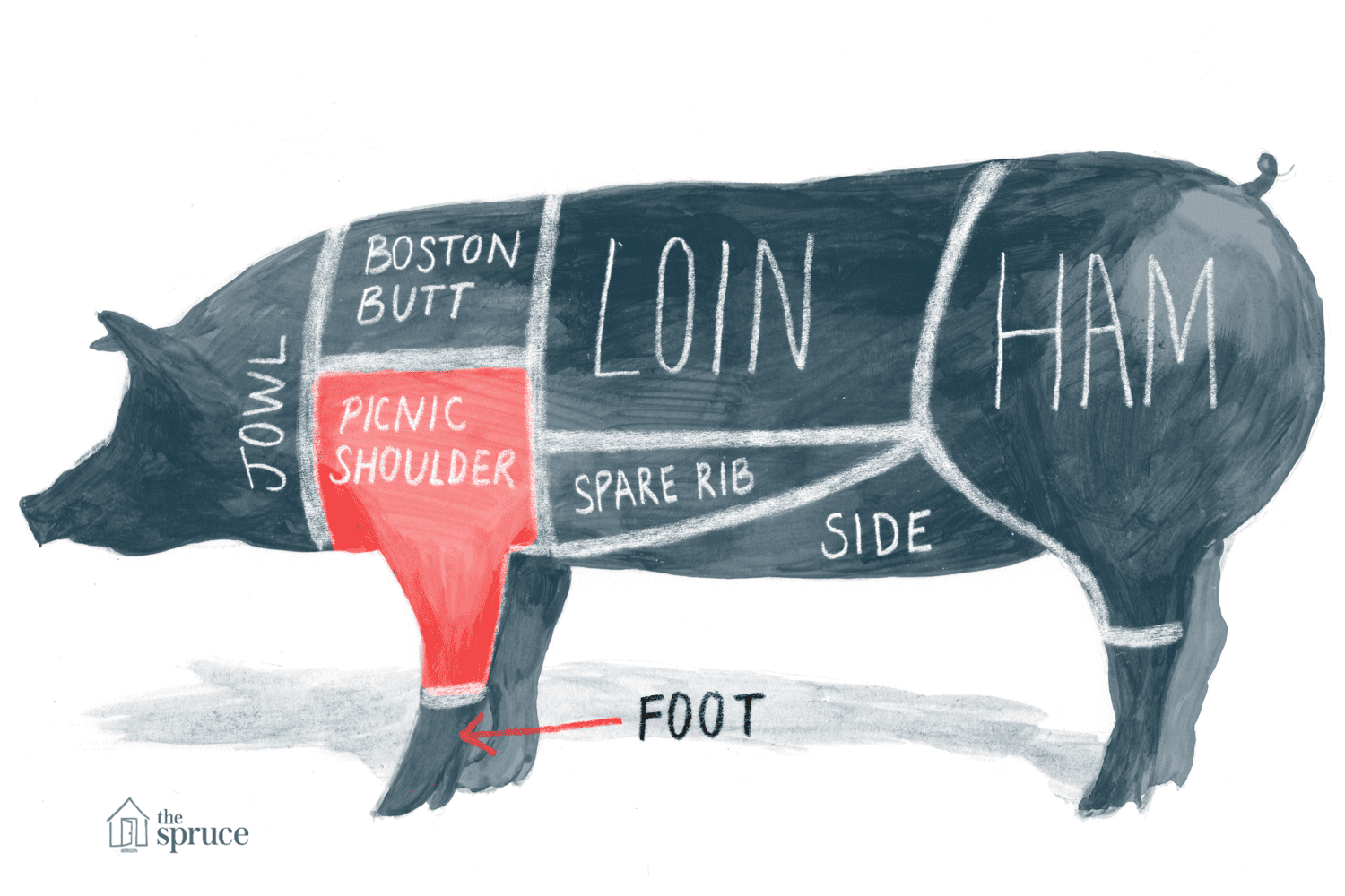 Illustrated diagram of the cuts of pork - highlighting the pork/picnic shoulder