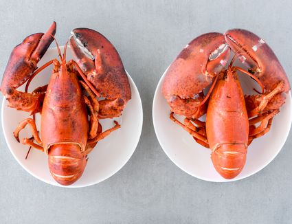 Remove cooked lobsters