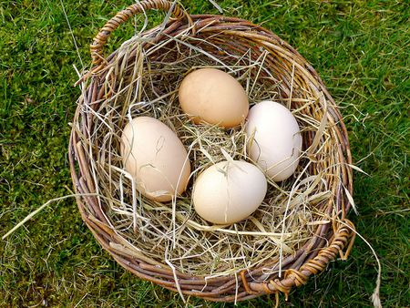 Pastured Eggs Are Different From Pasteurized