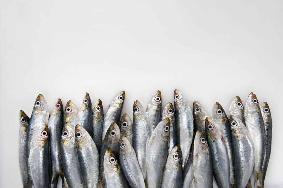 Sardines on white background