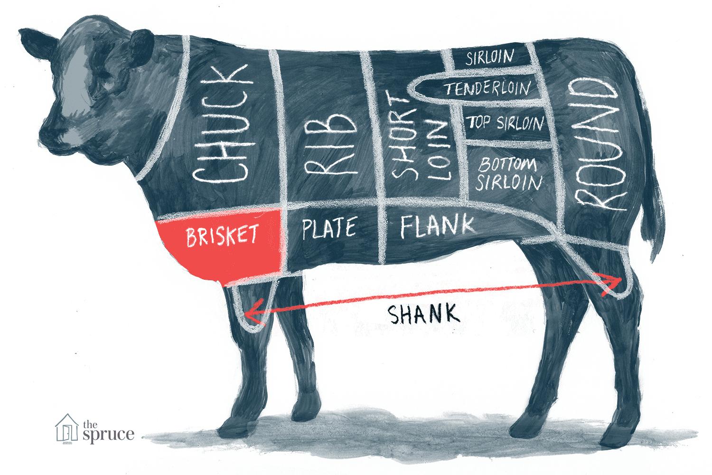 Illustration of brisket beef cut