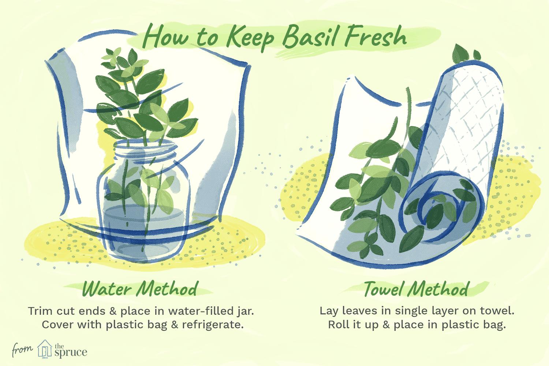 how to keep basil fresh illustration