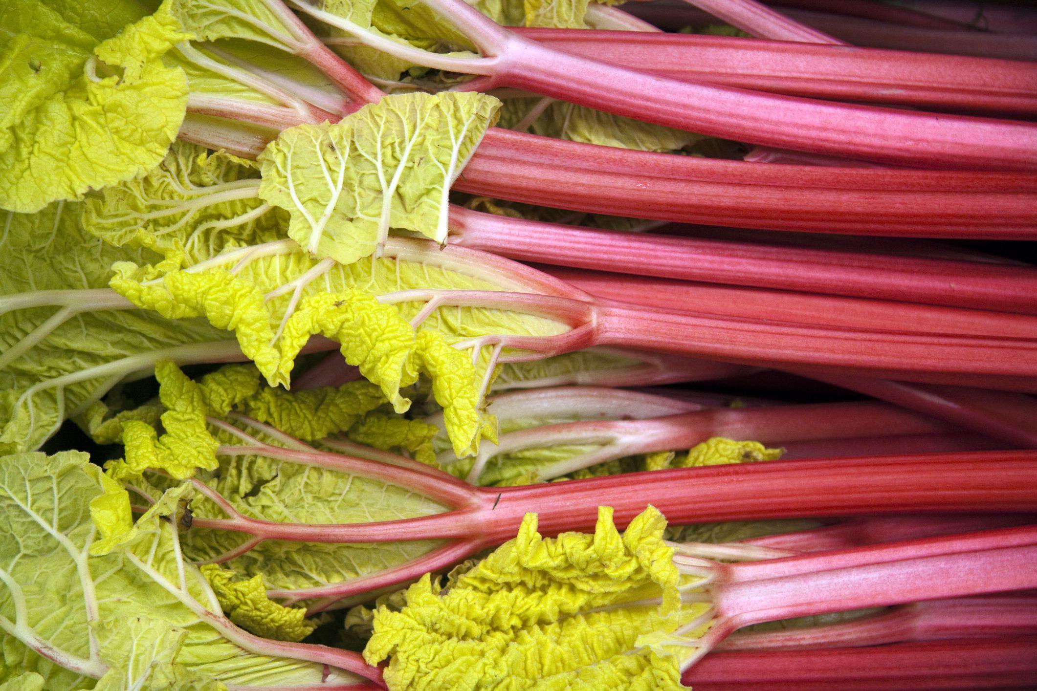easy recipe for rhubarb compote. Black Bedroom Furniture Sets. Home Design Ideas
