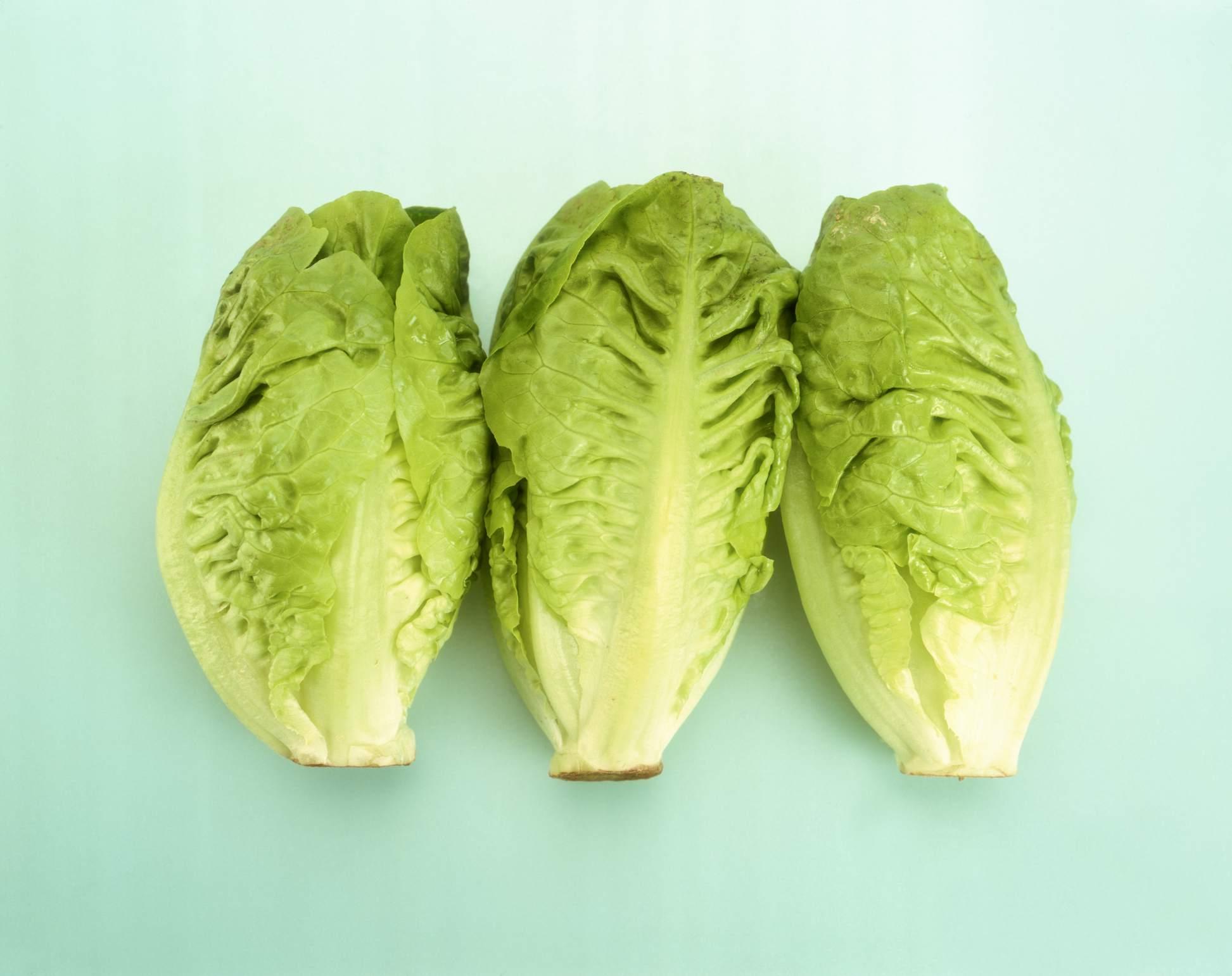 16 Types Of Lettuce Varieties