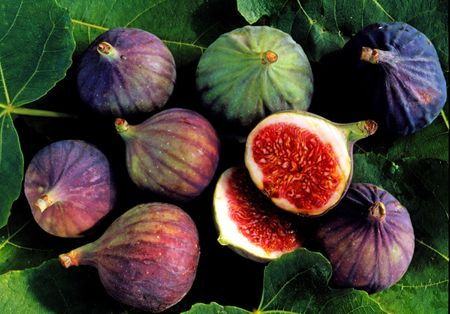 The Long Ancient History Of Figs