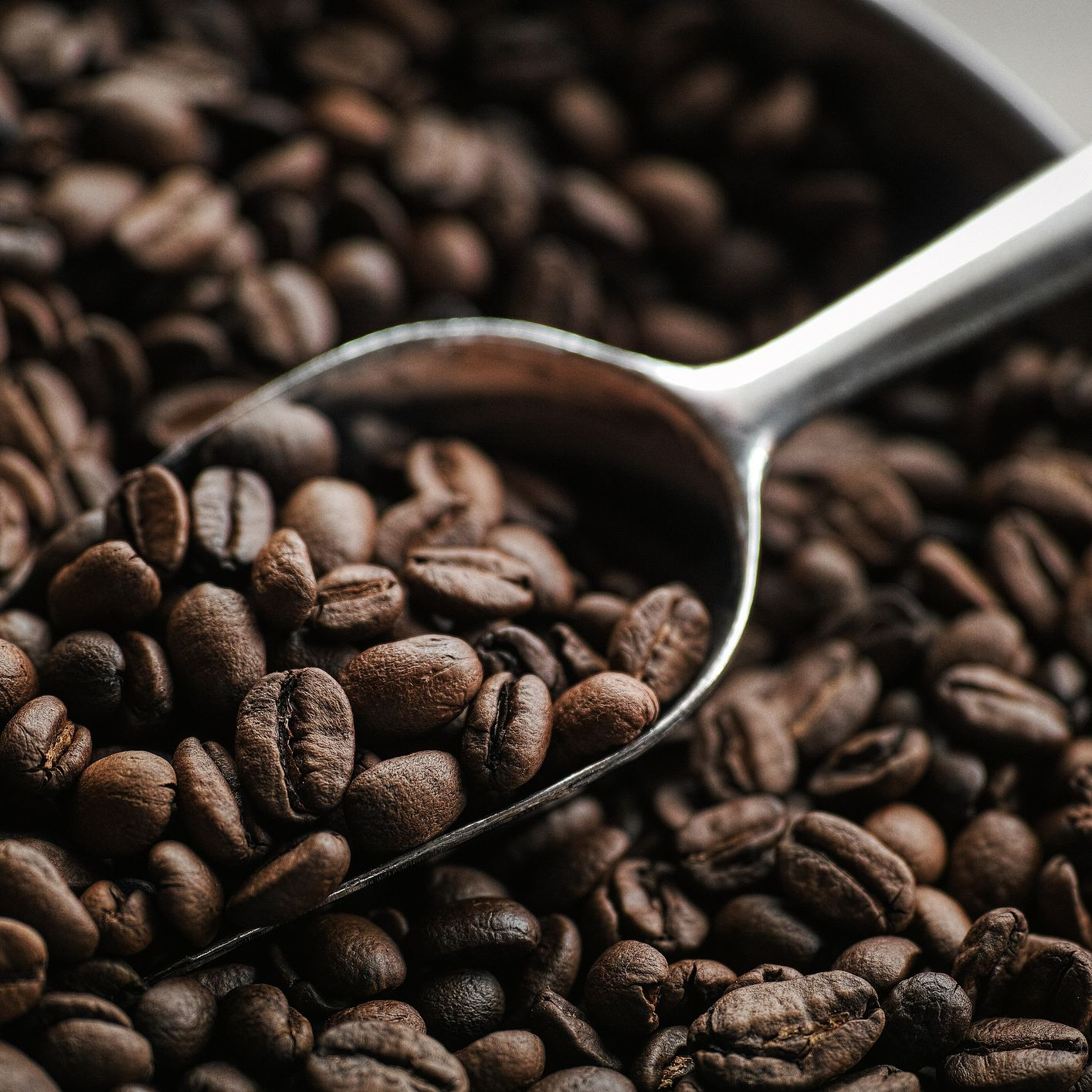 What Is Monkey Coffee Benefits Uses Recipes