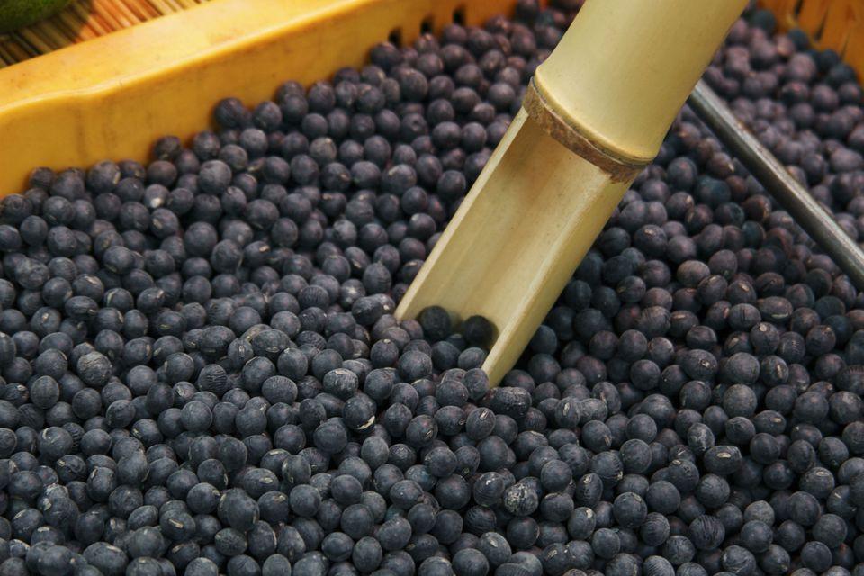 Black beans grown in Tanba