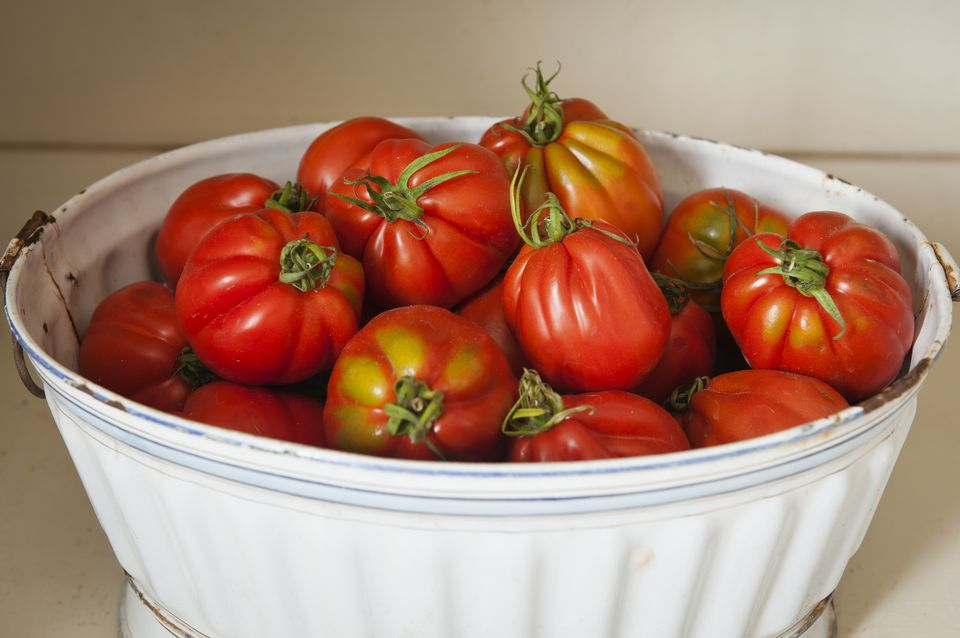 Fresh Tomatoes in bucket