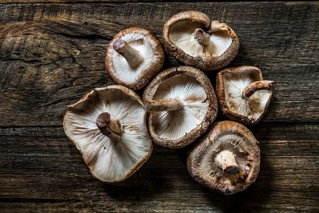 All About Black Mushroom Or Shiitake Mushrooms