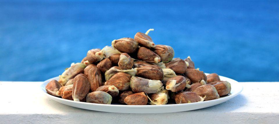 Breadnuts