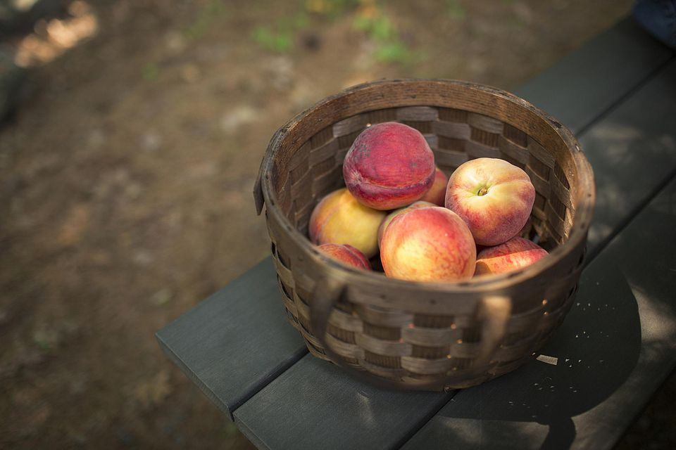 A round basket of fresh peaches, fruits.