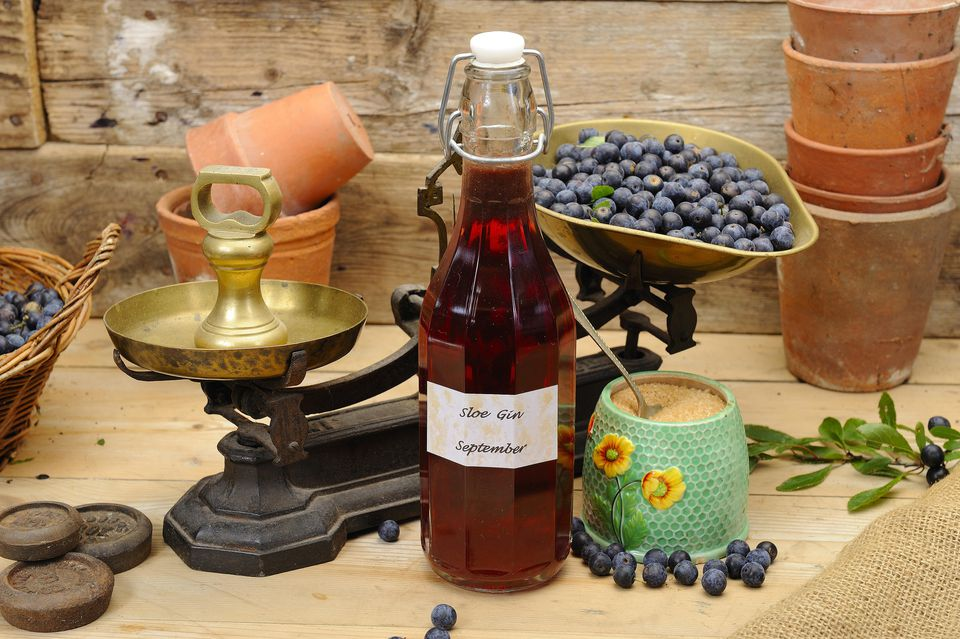 Making sloe gin