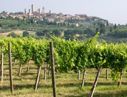 Italian Wine Guide for Beginners