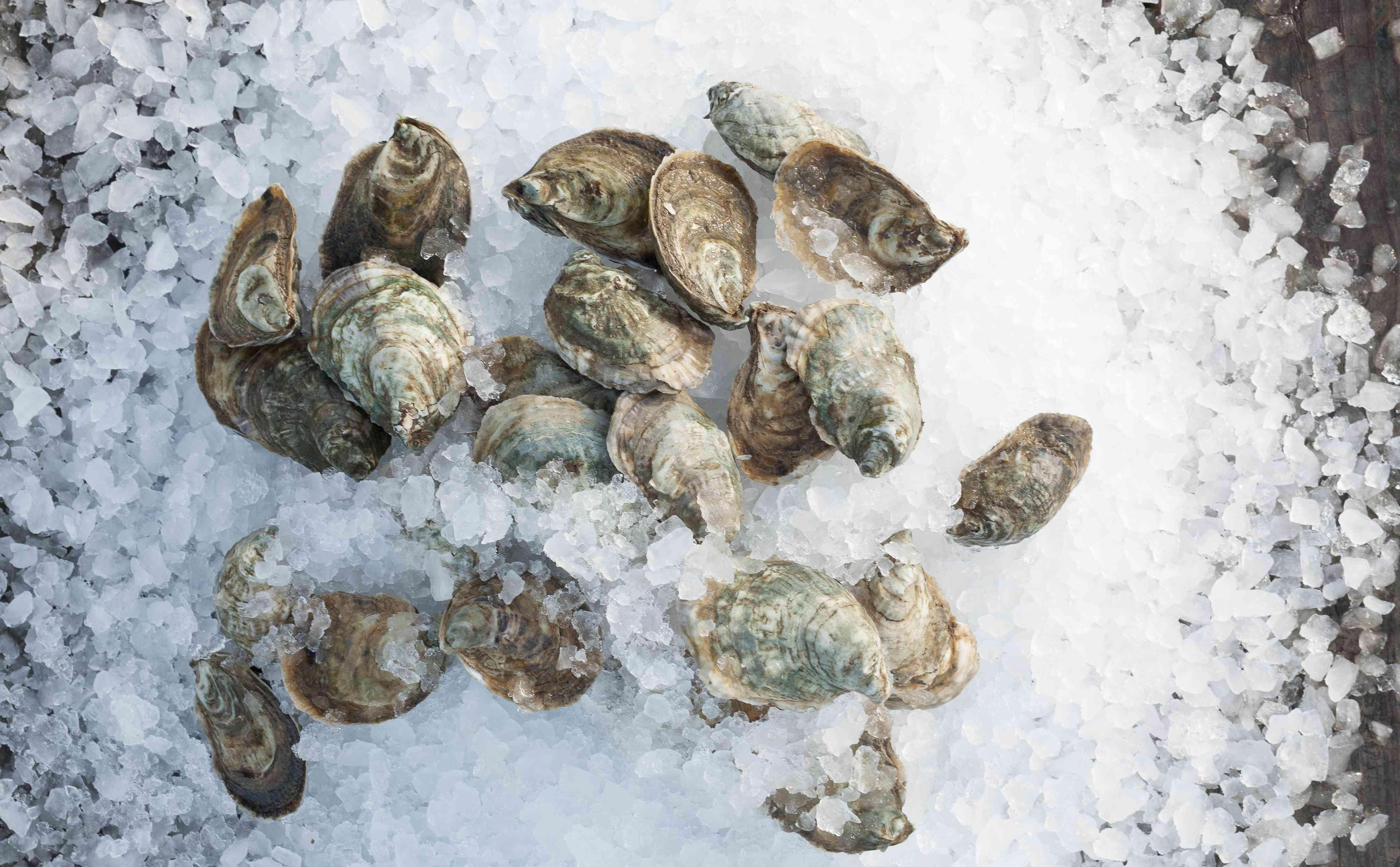 Rappahannock Oyster