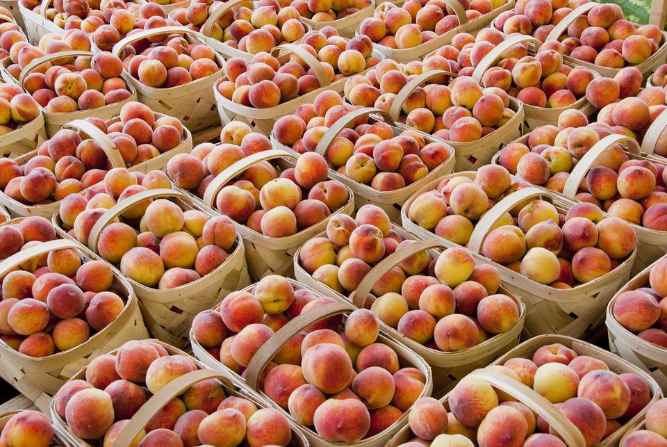Ripe Peaches in Baskets