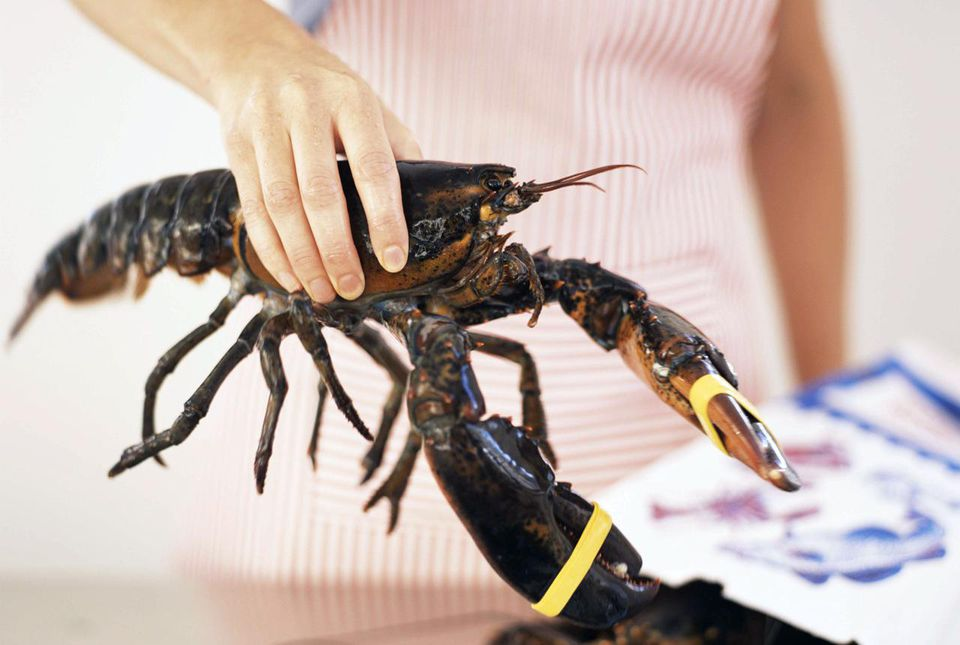 Woman with live lobster