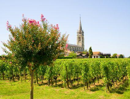 Vineyard, Pomerol, Aquitaine, France